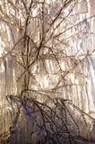 Frosen bush Royalty Free Stock Image