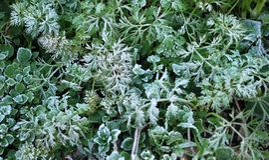 Frosen grass. Photo with the frosen grass Stock Photo