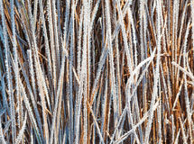 Frosen grass Royalty Free Stock Images