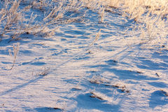 Frosen meadow in winter Royalty Free Stock Photos