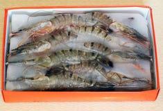 Frosen shrimps Stock Image