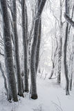Frosen winter forest Stock Photo