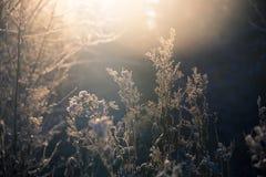 Frosenweide bij het donkere licht van het zonsopgangijs Stock Afbeelding