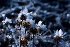 Frost покрыл заводы стоковое изображение