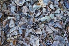 Frost выходит предпосылка Стоковое Фото
