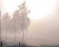 Frost в лесе швейцарских Альпов Стоковые Фотографии RF