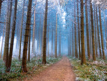 Frost в лесе швейцарских Альпов Стоковая Фотография RF