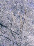 Frost в лесе швейцарских Альпов Стоковая Фотография