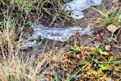 Frost и первый лед Стоковые Фотографии RF