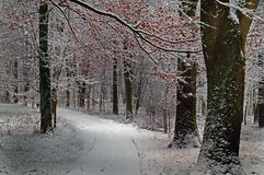 Frost - ландшафт зимы стоковое изображение