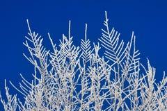 Frost на ветвях и голубом небе стоковая фотография rf