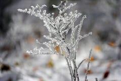 Frost на заводах во время холодной осени Стоковая Фотография
