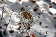 Frost на заводах во время холодной осени Стоковые Фото