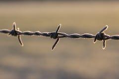 Frost на загородке колючей проволоки Стоковые Изображения