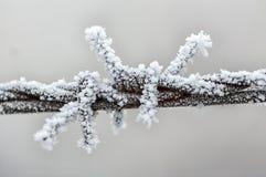 Frost на колючей проволоке Стоковые Фотографии RF