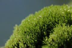 Frost на крошечных листьях Стоковые Фотографии RF