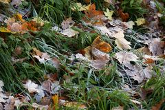 Frost на лист и траве Стоковое Изображение