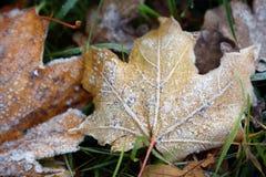 Frost на лист и траве Стоковое Фото