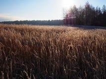 Frost на морозный день Солнечная погода o стоковые фото