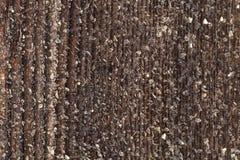 Frost на старой деревянной поверхности Роса и замерзать утра зимы стоковые изображения rf