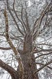 Frost покрыл ветви. Стоковая Фотография