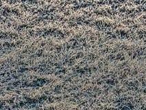 Frost покрытое bakground травы стоковое изображение rf