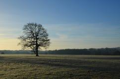 Frost покрыл ландшафт в Англии Стоковое Изображение RF