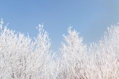 Frost покрыл ветви дерева против голубого неба Стоковое фото RF