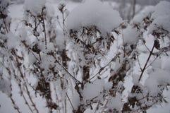 Frost покрыл ветви Стоковая Фотография RF