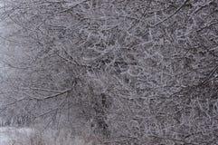 Frost покрыл ветви Стоковое Изображение RF