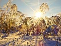 Frost после замерзающего дождя Стоковое фото RF