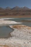 Frost похожие на покрытые заводы и банки озера Tso Kar, Ladakh, Индии Стоковые Изображения