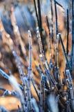 Frost расцеловал пустыню Стоковые Изображения