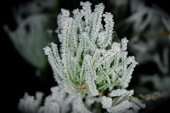 Frost_1. Frost of a cold swiss morning Royalty Free Stock Photography