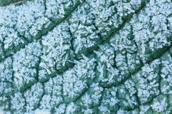 Frost. Green leaf  covered with winter frost Royalty Free Stock Photos