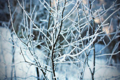 Frost. On the trees, winter, Lithuania Stock Photography
