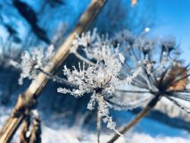 frost lizenzfreie stockbilder