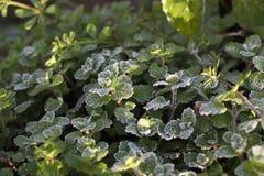 frost Royaltyfri Bild