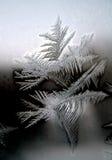 Frost Lizenzfreie Stockfotos