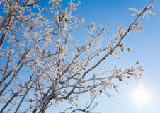 Frost. Beautiful crystals of frost on bare tree branches against clear blue sky Royalty Free Stock Photos