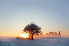frost Arkivbilder