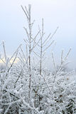 Frost. Winter scene - frost on branches Royalty Free Stock Photography