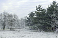 Frost. A winter scene - frozen landscape Royalty Free Stock Images