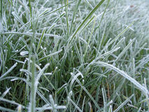 Frost-2 Royalty Free Stock Photos
