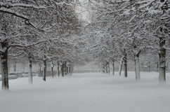 Frost. Snow park the wood trees white snow snowfall cold a frost emptiness the nature freshness park to walk winter walk Royalty Free Stock Images