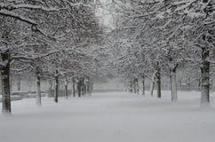 Frost Imágenes de archivo libres de regalías