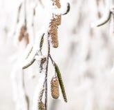 Frost Royaltyfria Foton