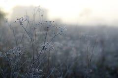 Frost Imagenes de archivo