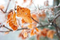 frost Royaltyfria Bilder