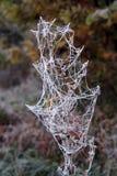 frost Lizenzfreie Stockfotografie